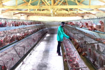 Income generating programs - Poultry